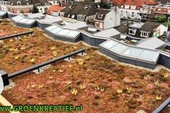 Sedumdak-VvE-bewonersvereniging-Utrecht-door-GROENKREATIEF.nl-te-Achterveld-Utrechtse-heuvelrug-Vallei-t-Gooi-Gelderland-Midden-Nederland-Amersfoort-Bilthoven-Huizen-Soest-Huissen-Laren
