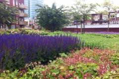 Binnentuin-Utrecht-2