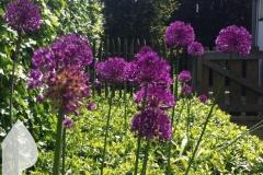 Engelse-tuin-3
