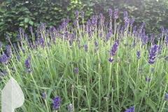 Engelse-tuin-4
