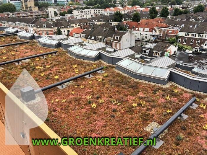 hartje-utrecht-sedumdaken-groenkreatief-nl-midden-nederland